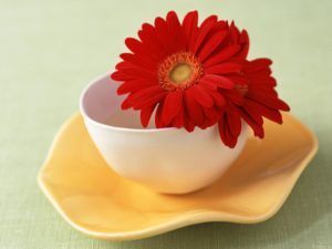 Flower in cup (Red delicious re-purposed)