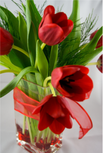 Red tulips valentines flowers in glass vase